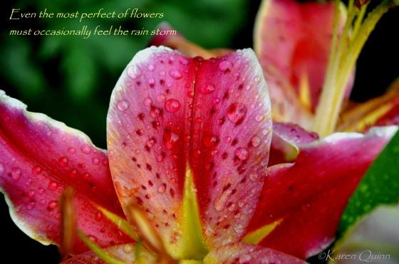 flowerRain